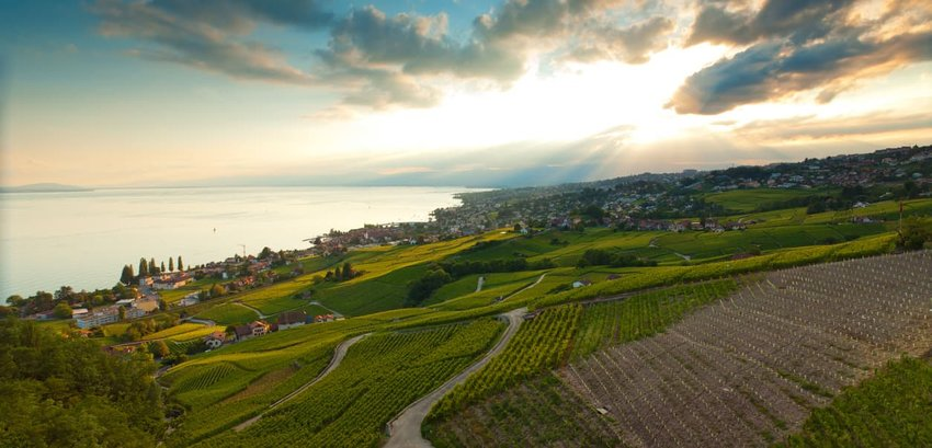 Lavaux Wine District