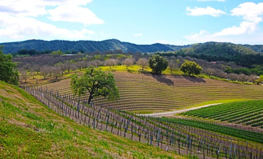 Sip Wine in Paso Robles, CA Paso robles, Weekend trips, Trip
