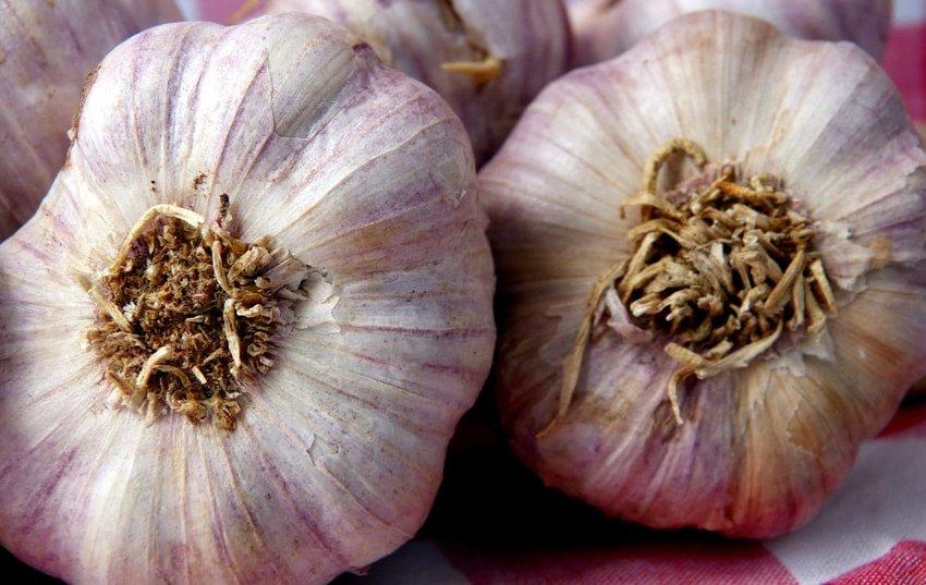 Garlic: Gilroy, CA