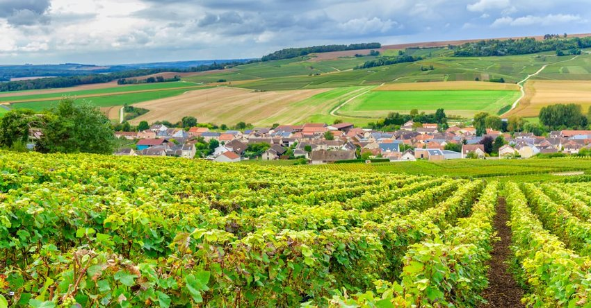 Champagne Vineyards, Montagne de Reims, France