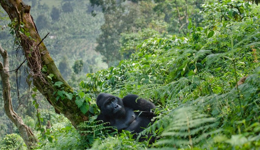 Bwindi Impenetrable National Park – Uganda