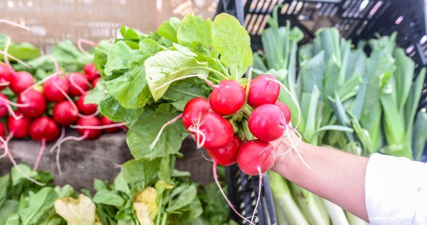 Plant-based-radishes