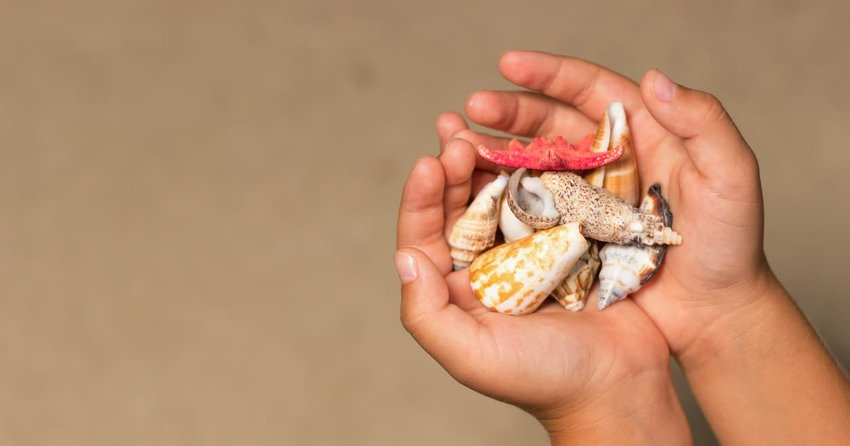 Shells in the hands of a child