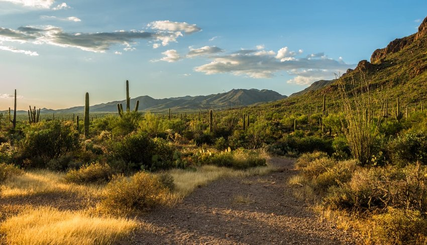desert southwest, tucson, arizona
