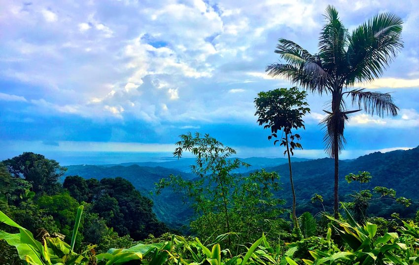 7 Rainforests to Add to Your Adventure Bucket List