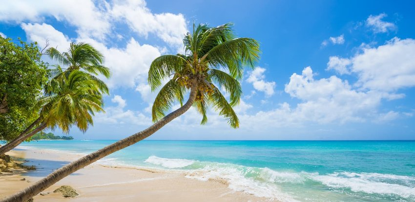 Barbados Beach with Turquoise Sea and Palm Trees