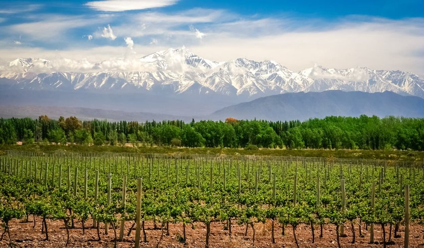 Vineyard near Mendoza, Argentina