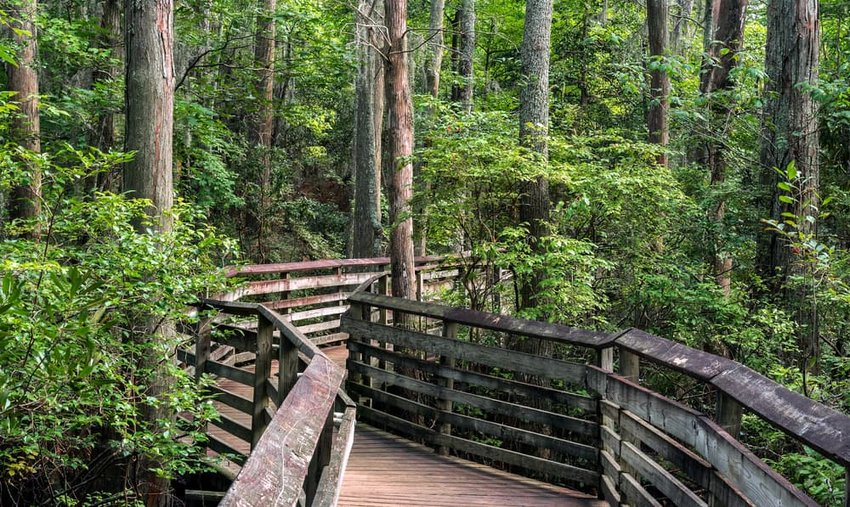 A boardwalk on the Bald Cypress path in First Landing state park, Virginia Beach, Va,