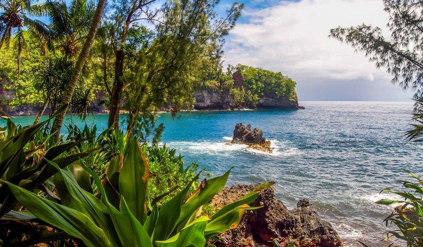 Rain forest near Hilo, Hawaii on a rocky beach shore overlooking the vast blue Pacific Ocean.