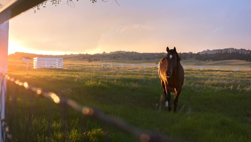 A horse gallops in a pasture during sunset at Fort Robinson, State Park