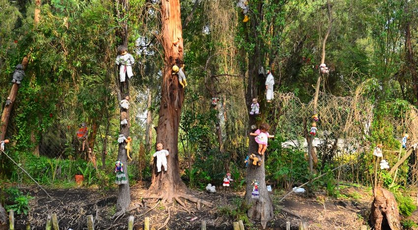 Xochimilco is an island of abandoned dolls, Isla de las Muñecas.