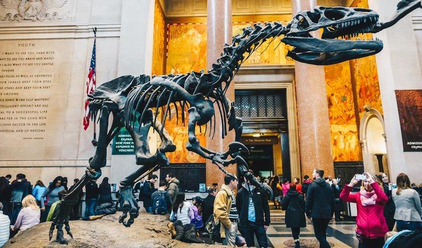 Natural-history-museum