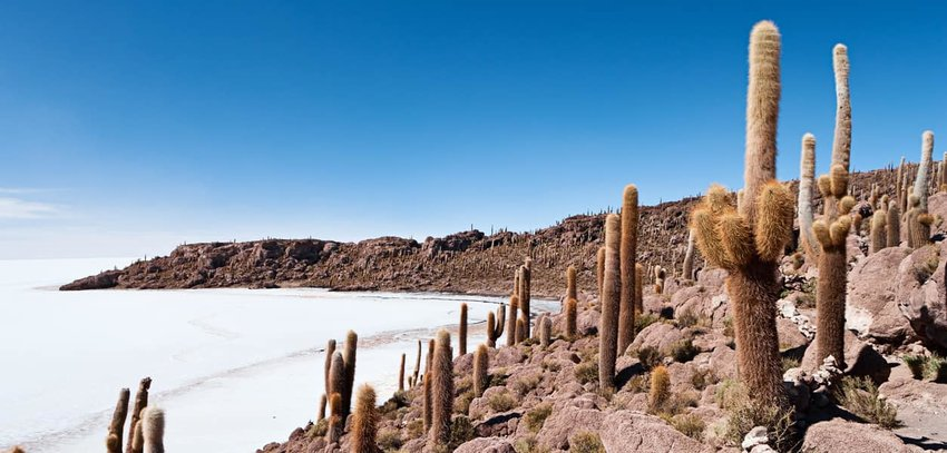 Salar-de-uyuni-cacti-in-Bolivia