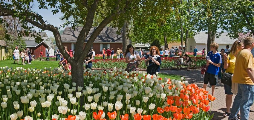 Tulip Time festival in Pella, Iowa