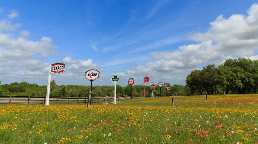 Old gas signs in a field of spring flowers during the antique weekend.