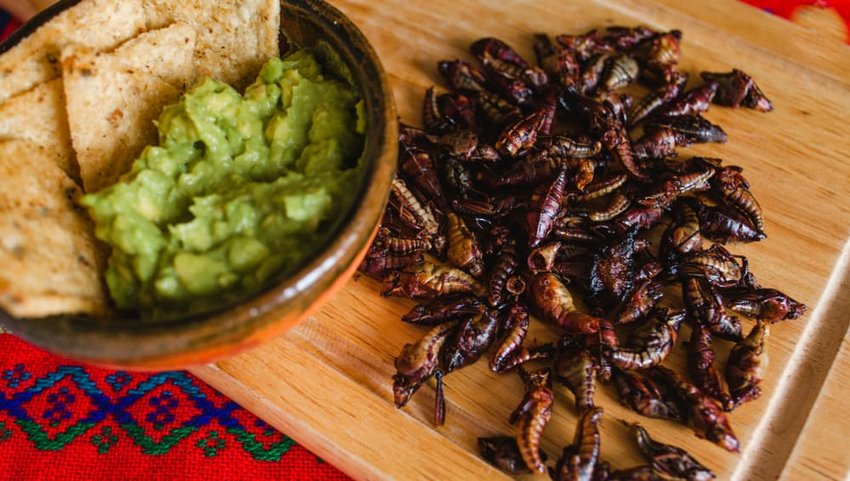 Chapulines, grasshoppers and guacamole snack traditional Mexican cuisine from Oaxaca mexico