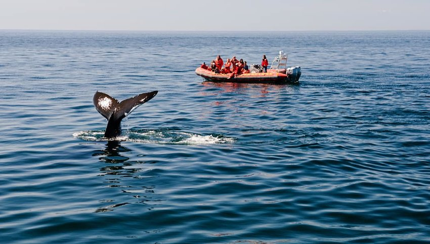 Bay-of-Fundy-Whale-Watching