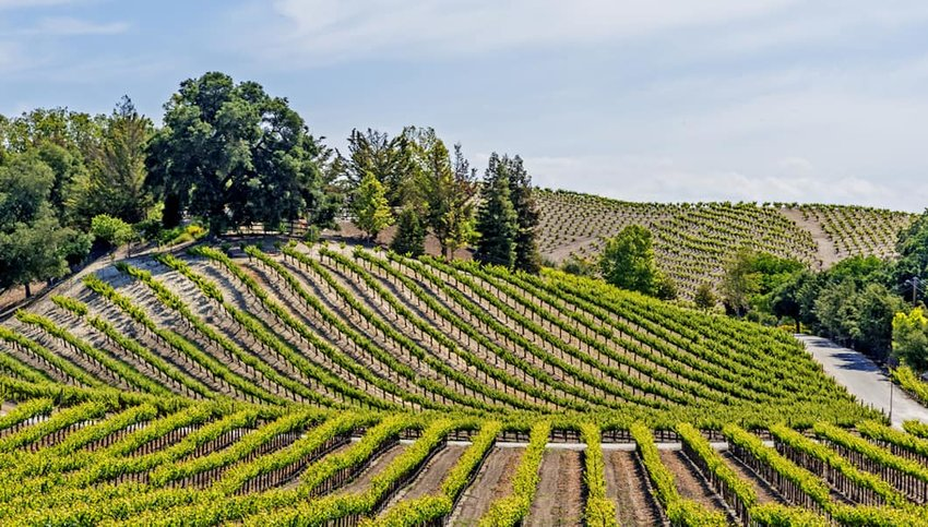 10 U.S. Wineries to Visit This Spring