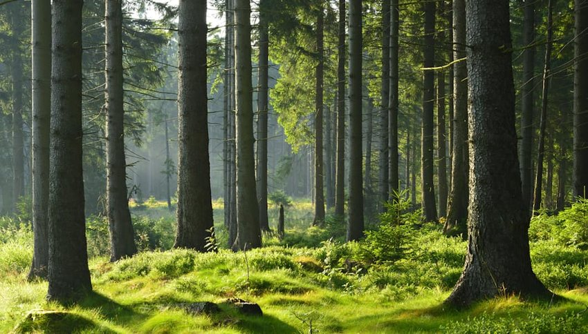 Forest Bathing – The Trend You Need to Know