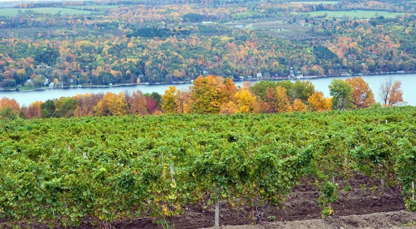Vineyard-on-Keuka-Lake