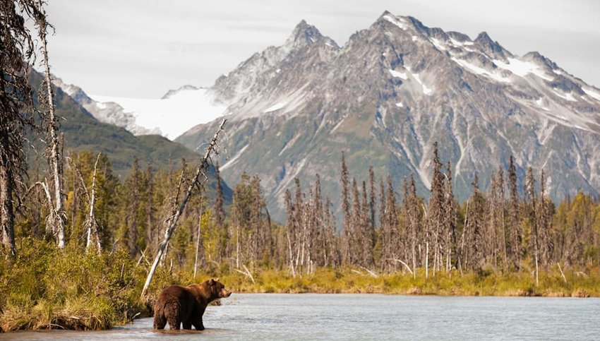 Photo of a brown bear in a river with a mountain in the background at Lake Clark National Park