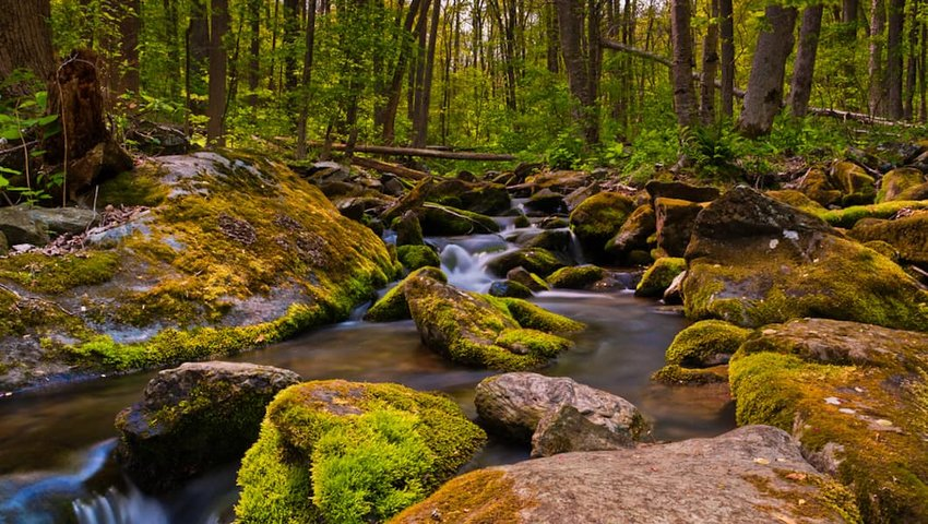 Photo of a river and forrest