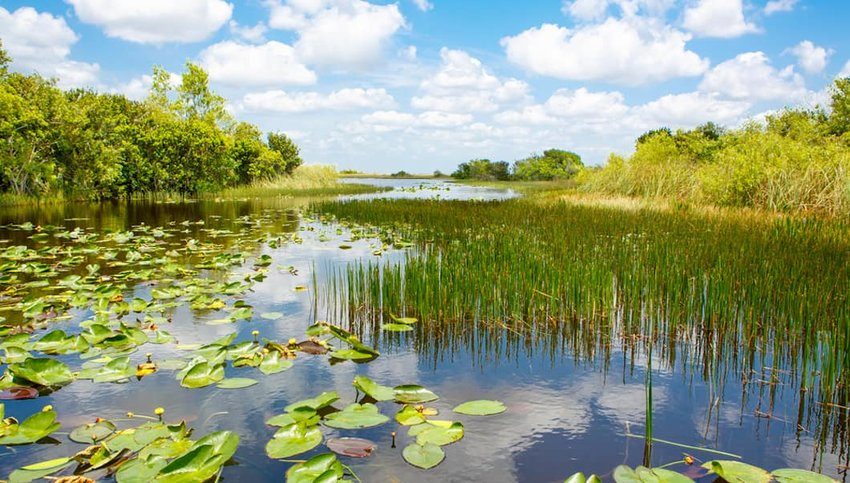 Photo of a marsh in Everglades National Park