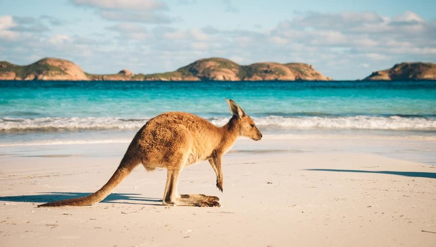 10 Things You Should Know Before Visiting Australia