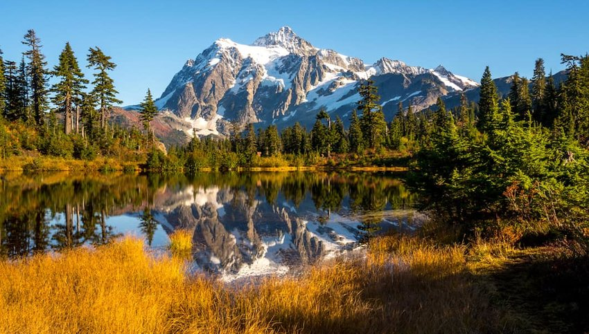 5 Breathtaking U.S. National Forests