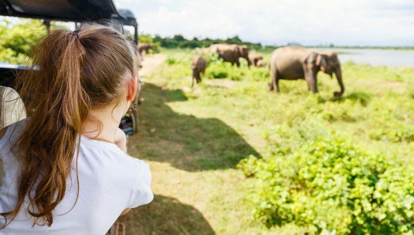4 Places to Safari in the U.S.