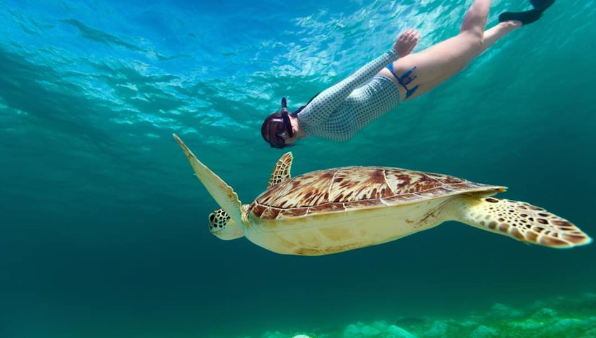 How to Snorkel Without Killing the Reef
