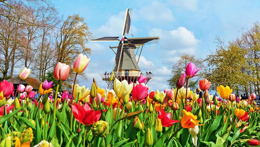 The Most Stunning Tulip Time Festivals in the World