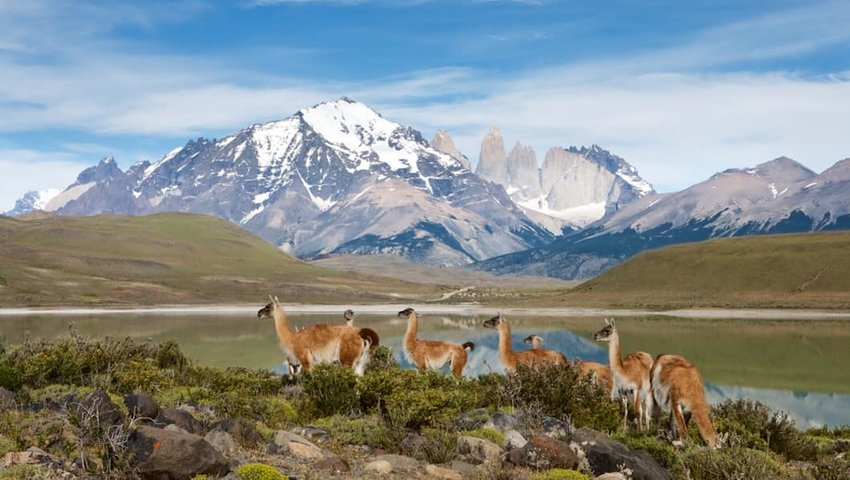 10 Places to See Incredible Wildlife in South America