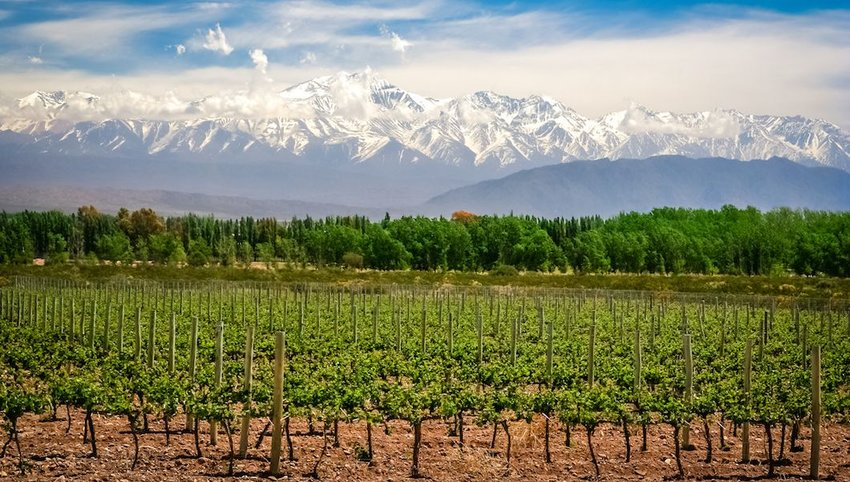 The Best Winery on Each Continent