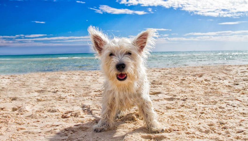 Top 10 Dog Beaches in the U.S.