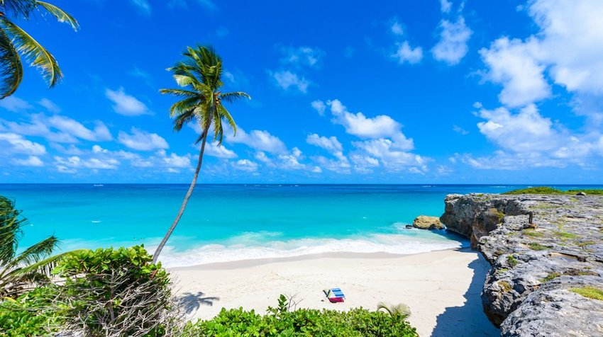 aradise beach on the Caribbean island of Barbados. Tropical coast with palms hanging over turquoise sea.
