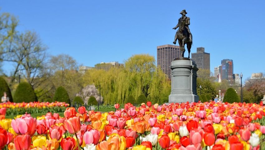 Photo of George Washington Statue surrounded by tulips in Boston Public Garden