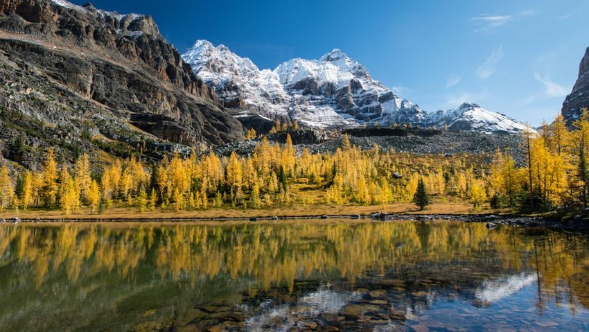 Photo of autumn trees around Lake O'Hara, Yoho National Park, Canadian Rockies