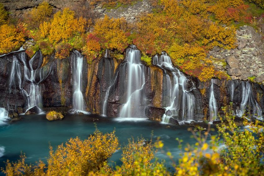 Hraunfossar waterfall in Iceland with trees changing color for autumn
