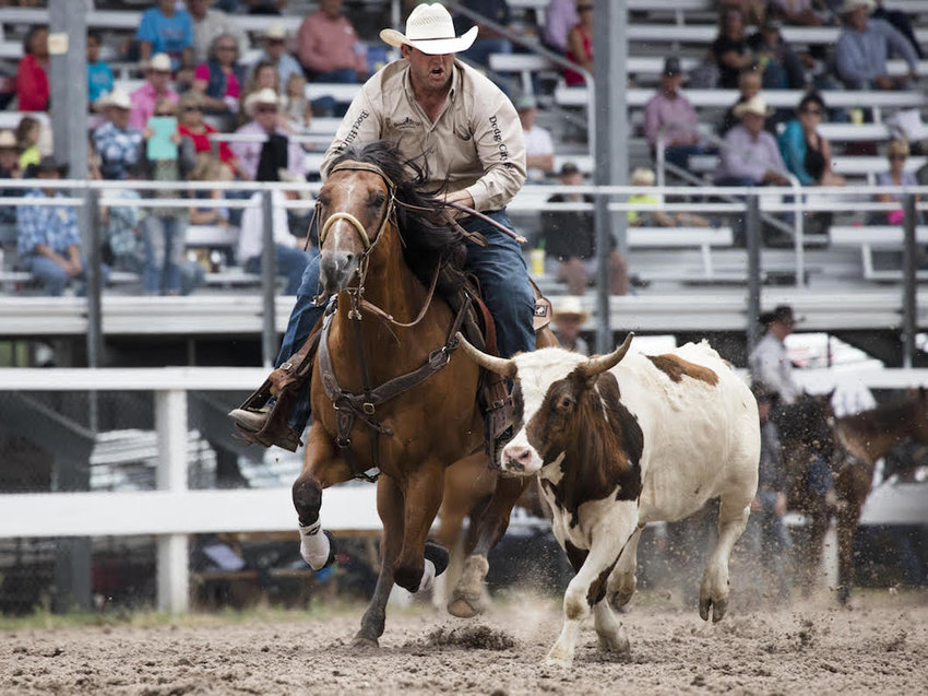Photo of a cowboy wrangling a steer