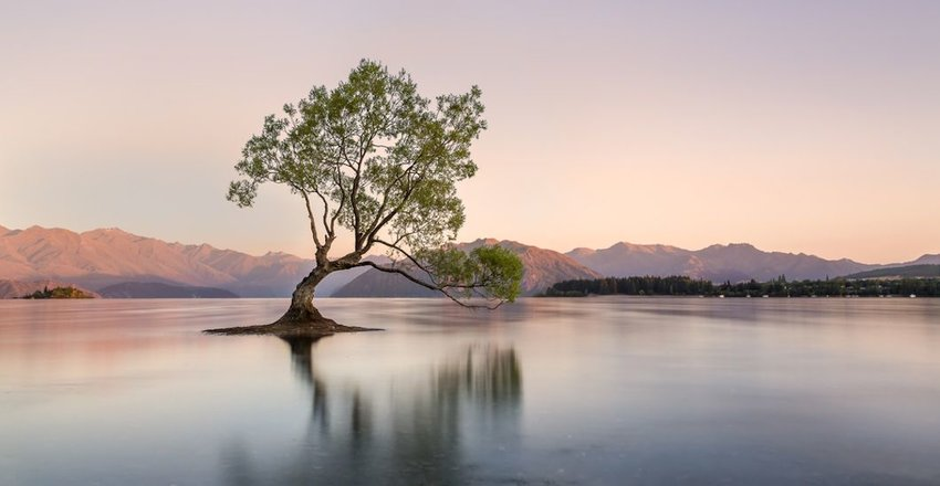 Tree in Lake Wanaka at sunrise