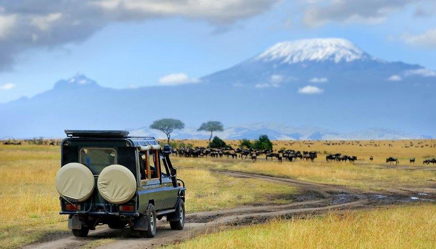 Safari game drive with wildebeest in Maasai mara reserve