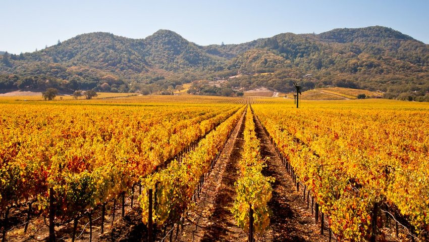 Napa Valley Vineyards in Autumn