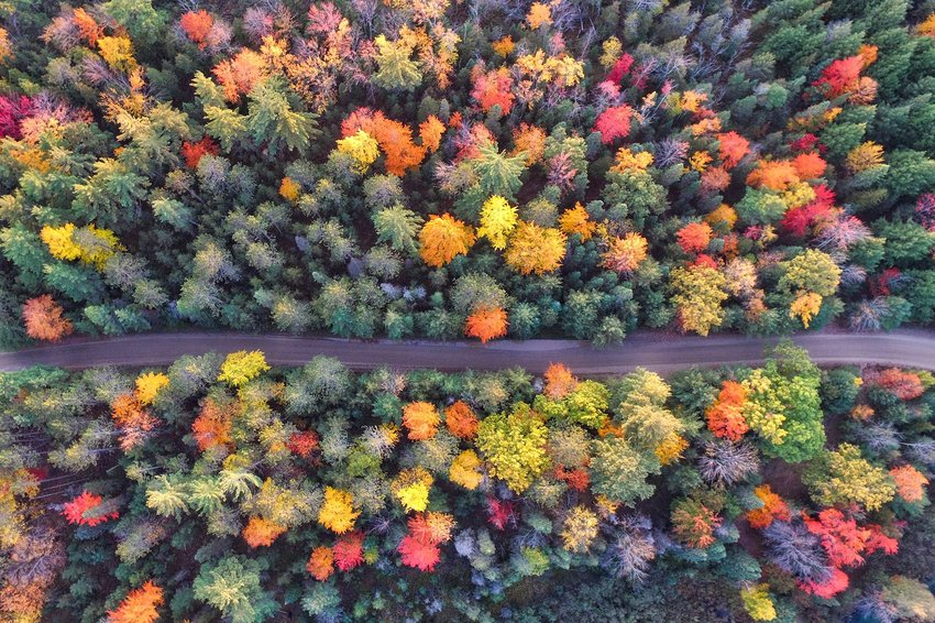Aerial photo of a road amongst changing trees