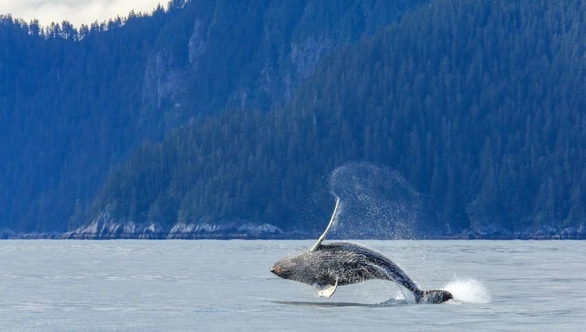 6 Incredible Animal Migrations in the U.S.