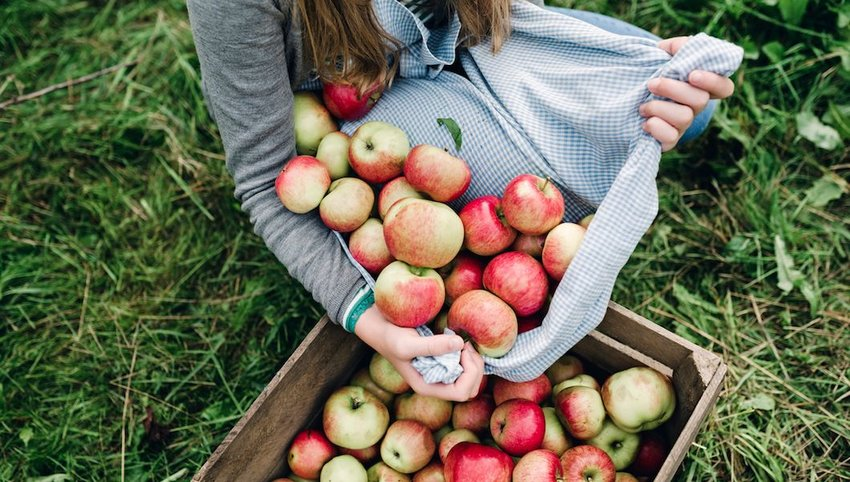 Woman collecting apples
