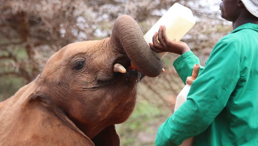 5 Places to Interact with Wildlife Responsibly