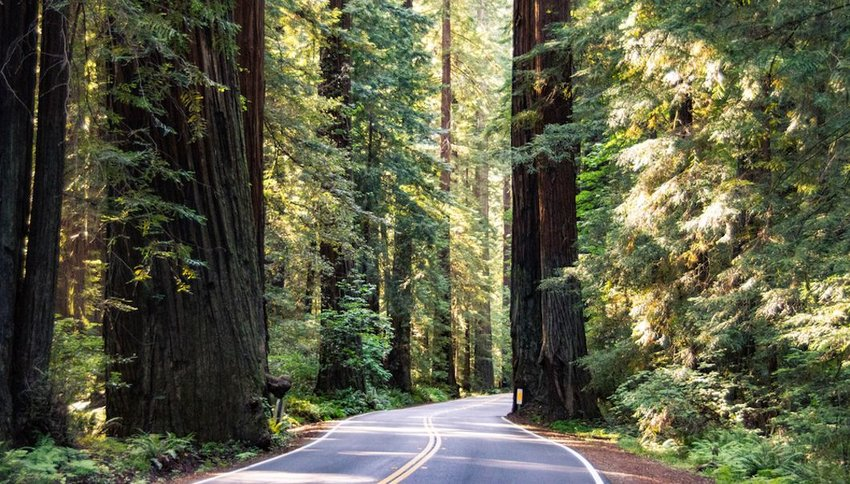 Redwoods highway winding through trees