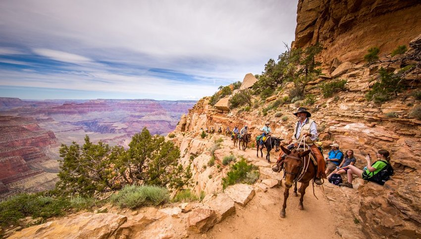 group of tourists riding horses on trail Grand canyon