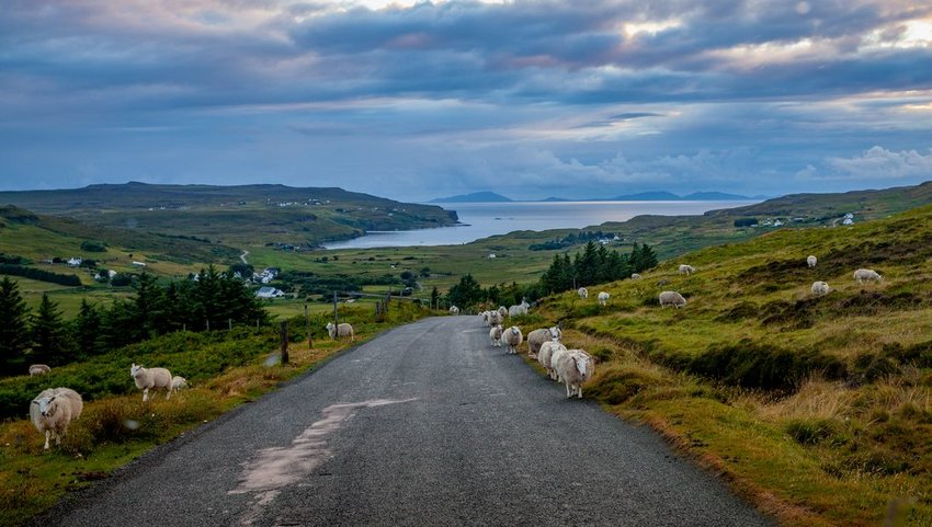 Sheep on rural road overlooking lake, Isle of Skye, Scotland